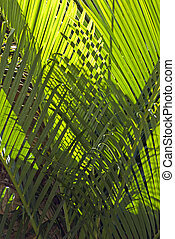 Pattern of interwoven palm leaves