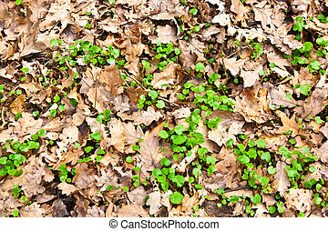 pattern of leaves in the forest - pattern of leaves in the...