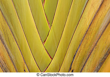 banana leaves branch