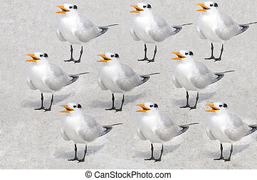 A repeated pattern of royal terns against a sandy background.