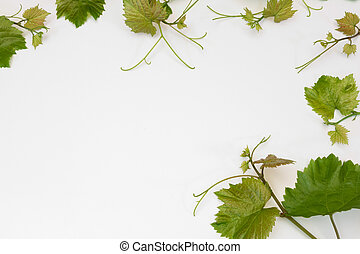 pattern of young vines lying on white
