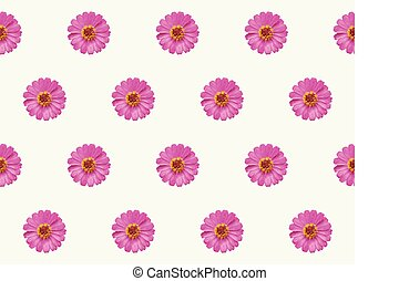 pattern pink flower zinnia violacea seamless abstract nature background