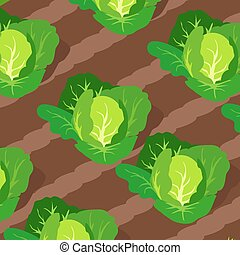 Pattern with Cabbages Growing on Beds