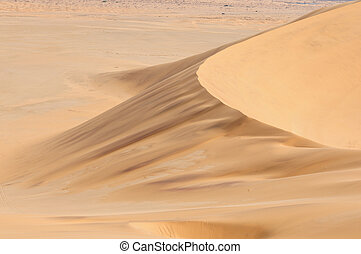 Patterns in the sand of the Namib 1