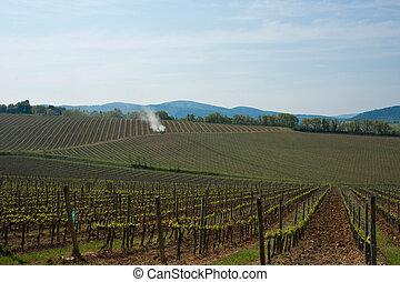 Patterns of spring, vineyards.