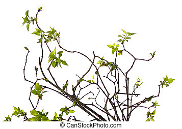 patttern of young twigs with green small leaves on white ...