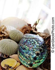 Paua shell