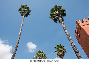 paume, angle, bas, arbres, vue