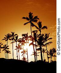 paume, arbre noix coco, silhouettes