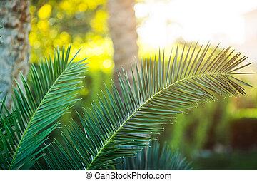 paume, gros plan, arbre, exotique