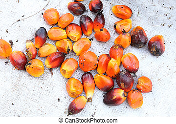 paume, huile, fruits