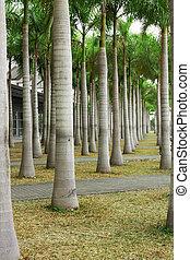 paume, long, route, rangées, arbres