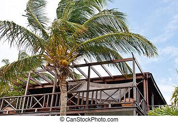 paume, noix coco, hamac, arbre, pont