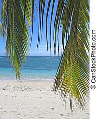 paume, pousse feuilles, bleu, mer, depuis, nattes, île, curieux, boraha, sainte, île, madagascar
