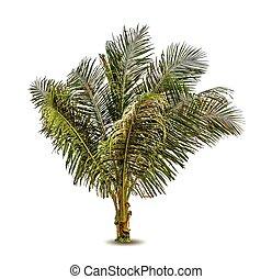 paume, vecteur, arbre, illustration