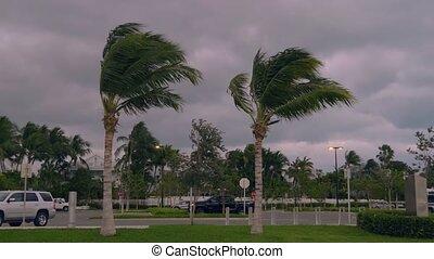 paume, vent, fort, tournants, usa, arbres, floride, orageux