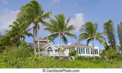 paume, yard, devant, arbres, maison, suburbain