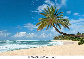 paumes, arbres, océan, intact, fond, azur, plage, sablonneux