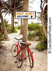 paumes, bicycles, scène, deux, tranquille, plage