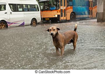 pauvre, debout, chien, eau pluie, inondation, rue