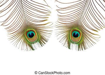 pavão, olhos