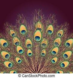 pavão, rabo, ilustração