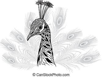 pavão, símbolo, cabeça, pássaro