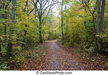 Paved footpath in autumn colors