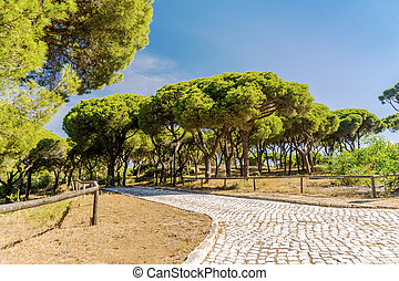 Paved path in beautiful southern pine tree forest, Algarve, south Portugal