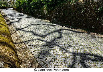 Paved road in the forest