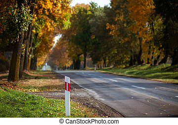 Paved road through the forest with autumn trees