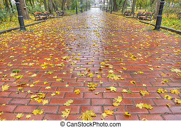 Paved sidewalk with autumn foliage. The Lvov park