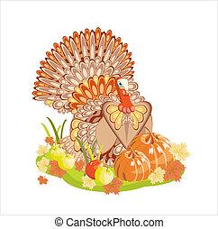 pavo, harvest/thanksgiving