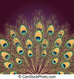 pavo real, cola, ilustración