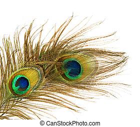 pavo real, encima, plumas, blanco