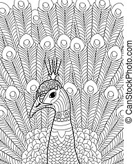 pavo real, vector, colorido, adultos