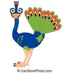 pavone, cartone animato, uccello