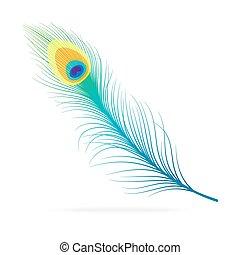 pavone, vettore, feather.