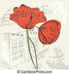 pavot rouge, fleurs