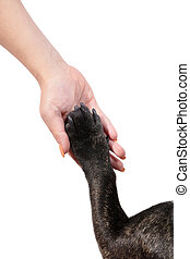 Paw of dog in female hand