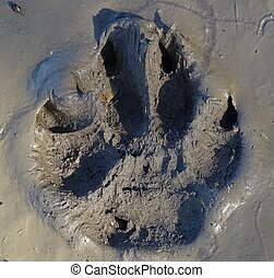 Muddy dog paw prints  Line of dirty dog paw prints made with
