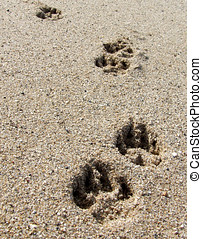 Paw Prints - Dog pawprints in the sand