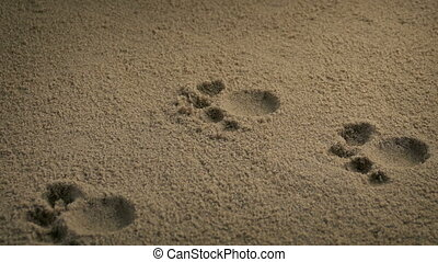 Paw Prints From Small Animal - Moving slowly past small...