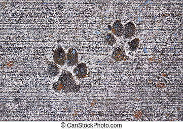 Paw Prints in Concrete - Paw prints of pup dried in concrete...