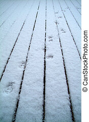 Paw Prints in Snow