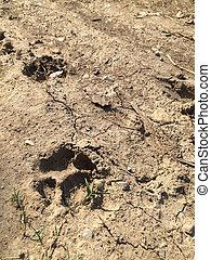 Paw prints on ground