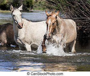 Pawing at the water - Wild Horses churning up the river...