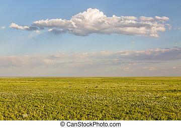 Pawnee National Grassland in springtime - short grass ...