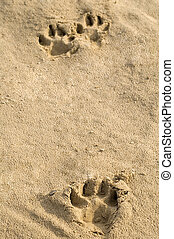 Pawprints in sand - Animal footprints founds in the sand on...