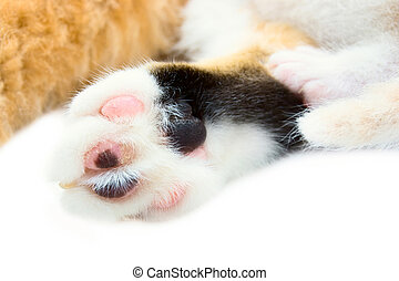 Paws of a cat and kitten a close up